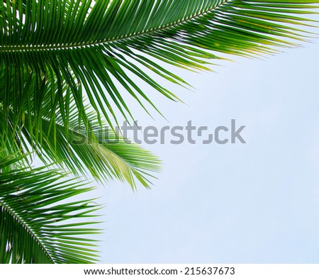 Green palm  - stock photo