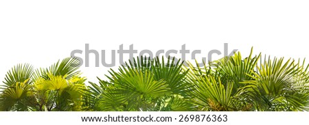 green palm foliage stripe isolated on white background - stock photo