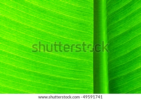 Green palm-leaf with its structure - stock photo
