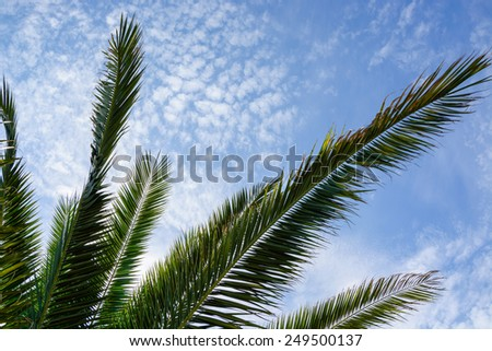 Green palm leaves against cloudy blue sky - stock photo