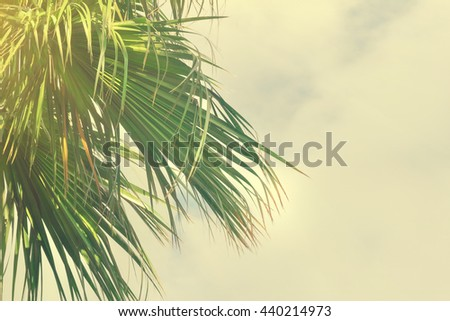 Green palm leaves against the sky. Toned - stock photo