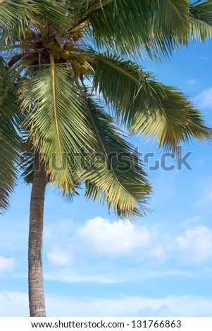 green palm tree in front of blue sky - stock photo