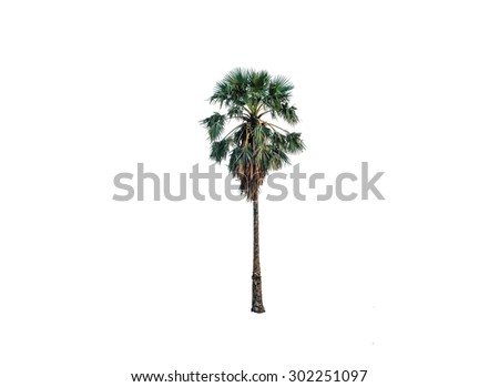 Green palm tree isolated on white background - stock photo