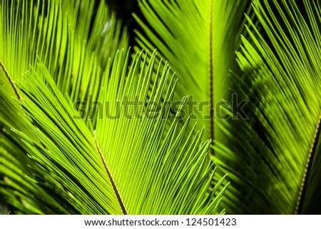 Green palm tree leaf as a background ( HDR image ) - stock photo
