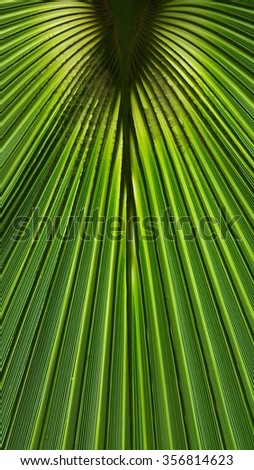 Green palm tree leaf background in close view - stock photo