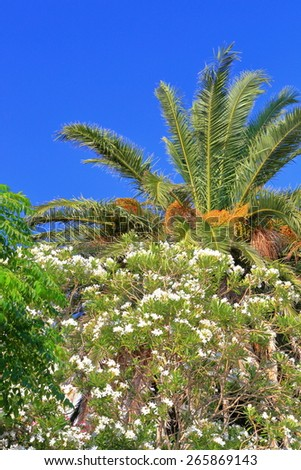 Green palm tree leaves surrounded by Mediterranean vegetation in sunny day - stock photo