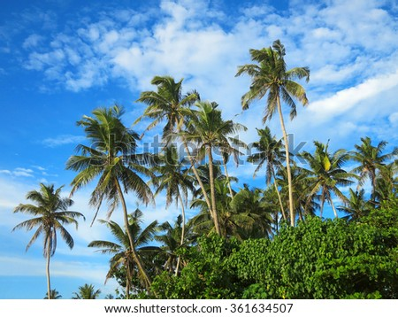 Green palm trees on blue sky background - stock photo