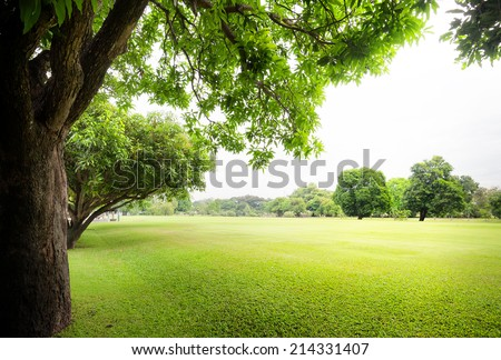 Green park with fresh grass and trees at summer season  - stock photo