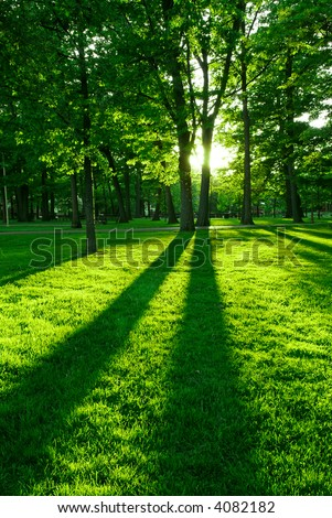 Green park with long shadows from setting sun - stock photo