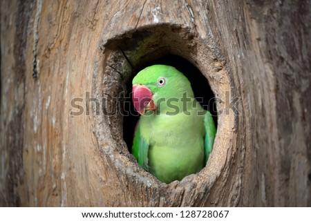 Green parrot. - stock photo