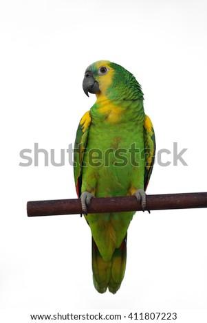 Green Parrot in Amazon - stock photo