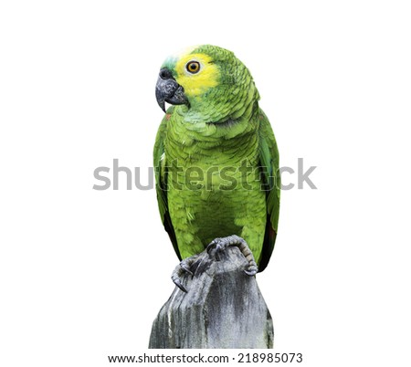 Green Parrot in Amazon isolated on white background - stock photo
