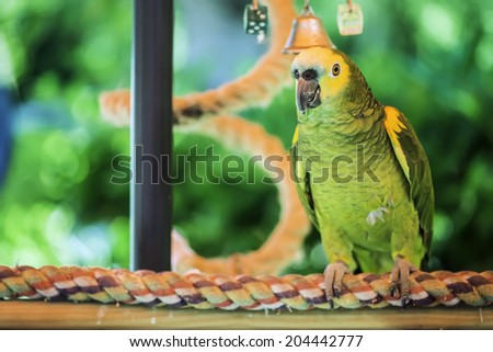 Green parrot perched on a swing - stock photo