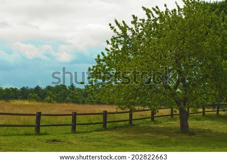 Green pasture with blue sky in summer - stock photo