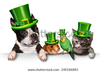 Green Pet sign with a fun cat happy dog cute hamster and budgie wearing a spring shamrock hats with clover hanging on a horizontal white placard with copy space. - stock photo