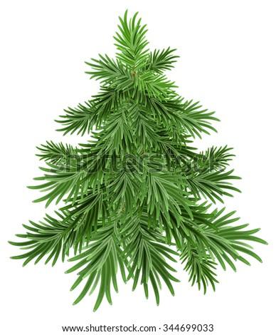 Green pine tree - stock photo