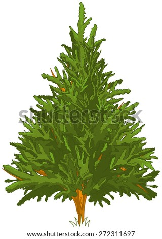 Green Pine tree for your design - stock photo