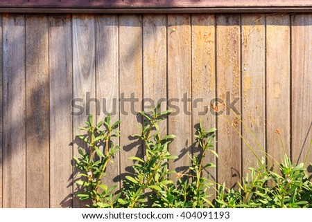 green plant and leaf plant over wood fence background - stock photo