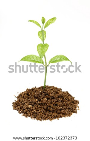 Green Plant and Soil Isolated on white - stock photo