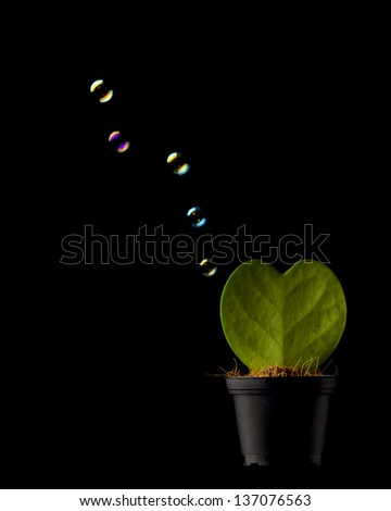Green plant as heart isolated on black with watter soap bubbles around - stock photo