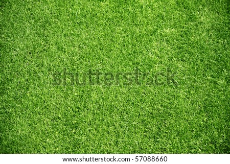 green plant background, young grass - stock photo