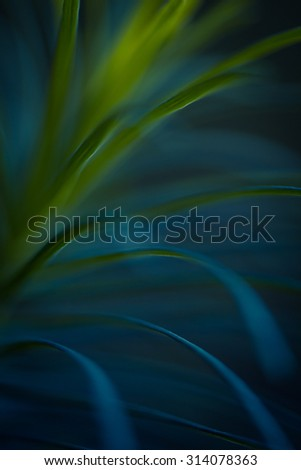 Green plant close up. Abstract bacground. Soft Focus, SDOF. - stock photo