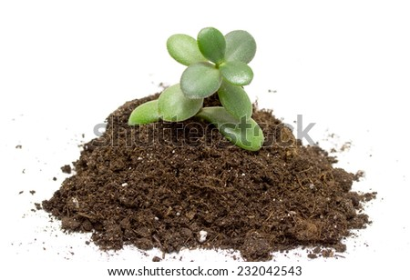 green plant in soil on white background - stock photo
