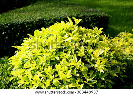 Green plant in the garden - stock photo