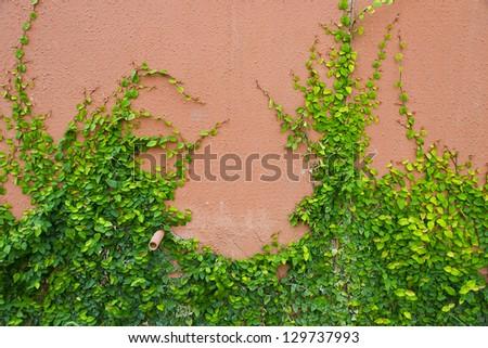 Green plant on brick wall - stock photo