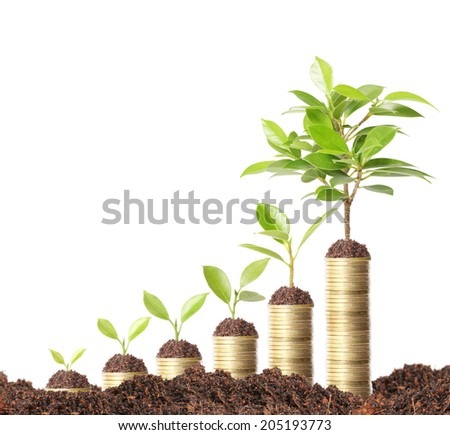 green plant on the gold coins  - stock photo