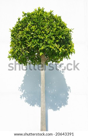 Green plant on white background. - stock photo