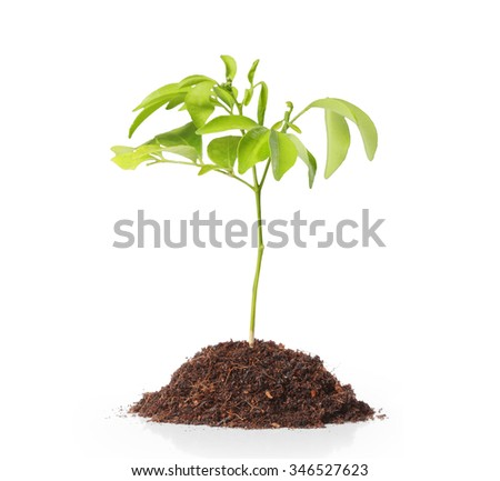 Green  plant, sprout growing from - stock photo