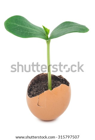Green plant sprouting from the ground in an eggshell - stock photo