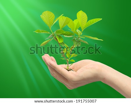 Green plant with green background - stock photo