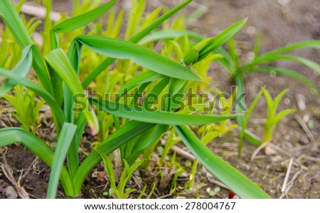 Green plants after winter in march and april - stock photo
