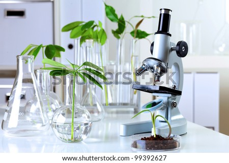 Green plants and scientific equipment in biology laborotary - stock photo