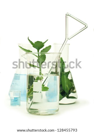 Green plants in laboratory equipment on white background - stock photo