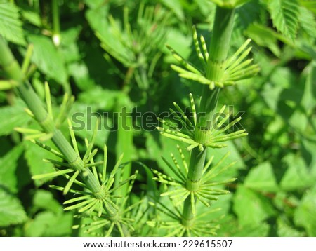 green plants. medium shot. - stock photo