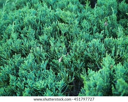 Green plants texture background,close up. - stock photo
