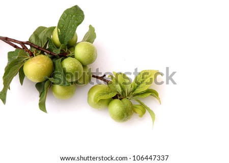 Green plums - stock photo