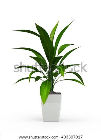 Green potted plant isolated on white background. 3D Rendering, 3D Illustration. - stock photo