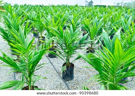 green power palm oil tenera fruit bunch background - stock photo