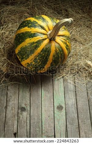 Green pumpkin in a barn - stock photo