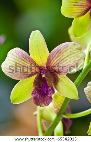 green purple orchid in the garden - stock photo