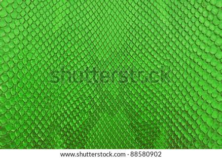 Green python snake skin texture background. - stock photo