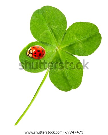 Green quarter-foil with ladybug on a white background. - stock photo