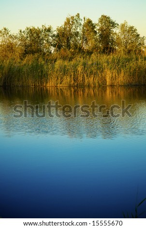 Green reed with the view of the lake - stock photo