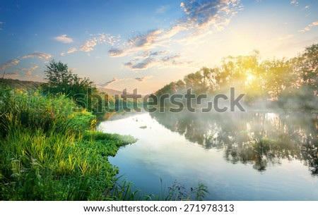 Green reeds by the river in the morning - stock photo