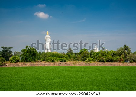 green rice field and white buddha image with clear blue sky - stock photo