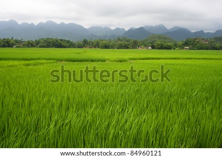 Green rice fields and mountains in Northern Highlands of Vietnam South East Asia - stock photo